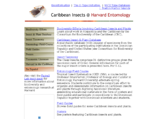 Thumbnail for Caribbean Insects @ Harvard Entomology: Insect and Plant Database