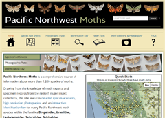 Thumbnail for Pacific Northwest Moths