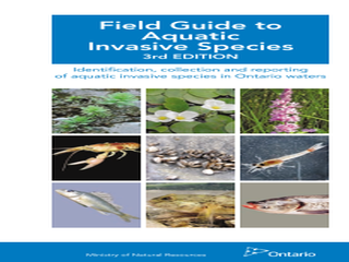 Thumbnail for Field Guide to Aquatic Invasive Species 3rd Edition - Identification, Collection, and Reporting of Aquatic Invasive Species in Ontario Waters