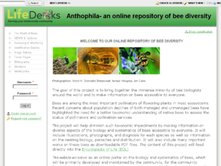 Thumbnail for Anothophila - An Online Repository of Bee Diversity