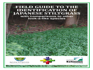 Thumbnail for Field Guide to the Identification of Japanese Stiltgrass: With Comparisons to Other Look-a-like Species