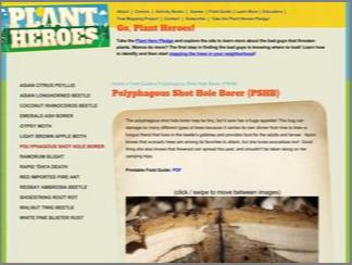Thumbnail for Plant Heroes: Polyphagous Shot Hole Borer (PSHB)