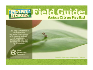 Thumbnail for Plant Heroes Field Guide: Asian Citrus Pysllid